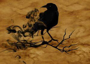 raven-1002849_1280